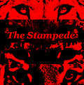 The Stampede image