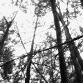 Dark Ambient Forest image