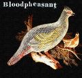 bloodpheasant image