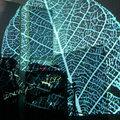 Spheroid image