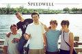 Speedwell image