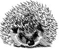 Irritable Hedgehog image