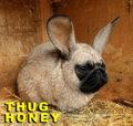 Thug Honey image