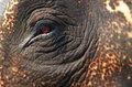 El Sueño de los Elefantes image