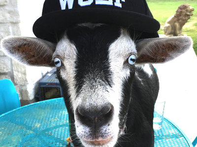 WOLF Hat - Free shipping in USA main photo