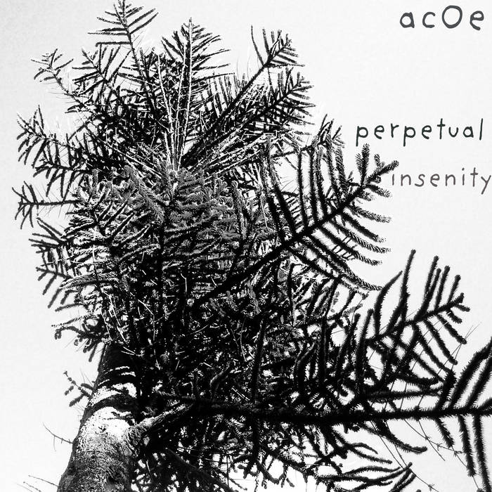 Perpetual Insenity cover art