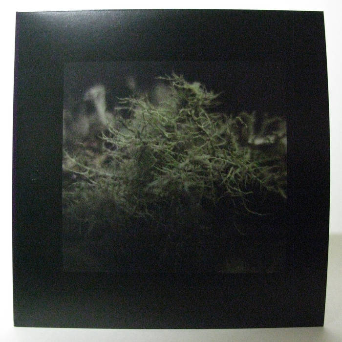 The Lichens in the Trees cover art