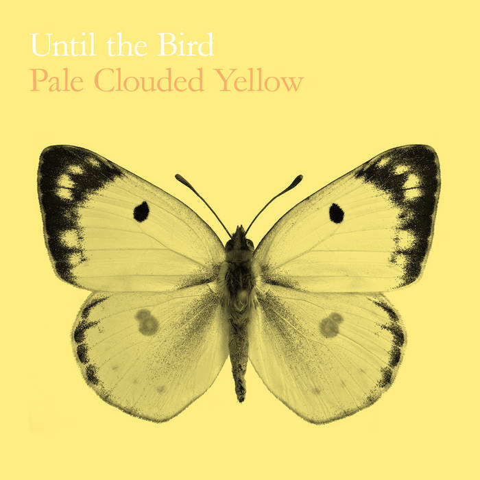 Pale Clouded Yellow cover art