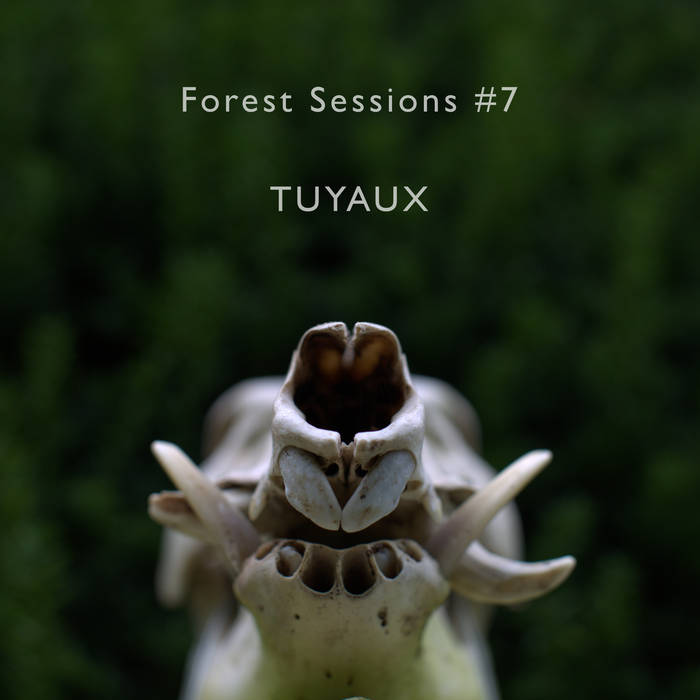 Forest Sessions #7 : Tuyaux cover art