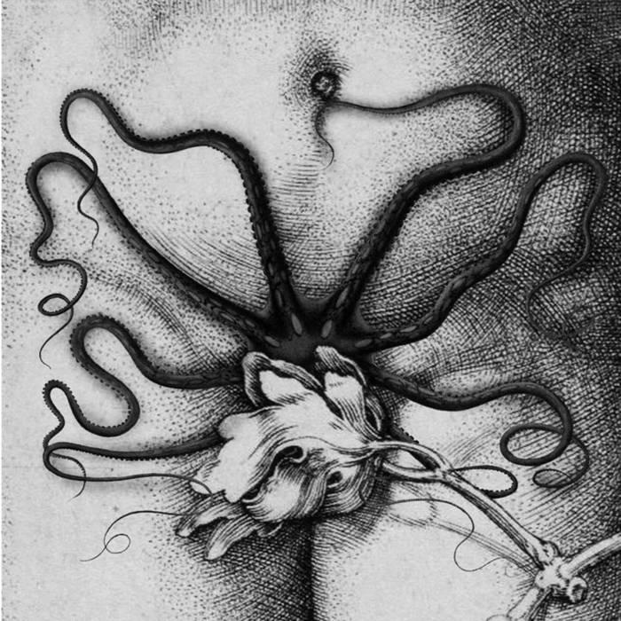 organon / Biche split LP cover art