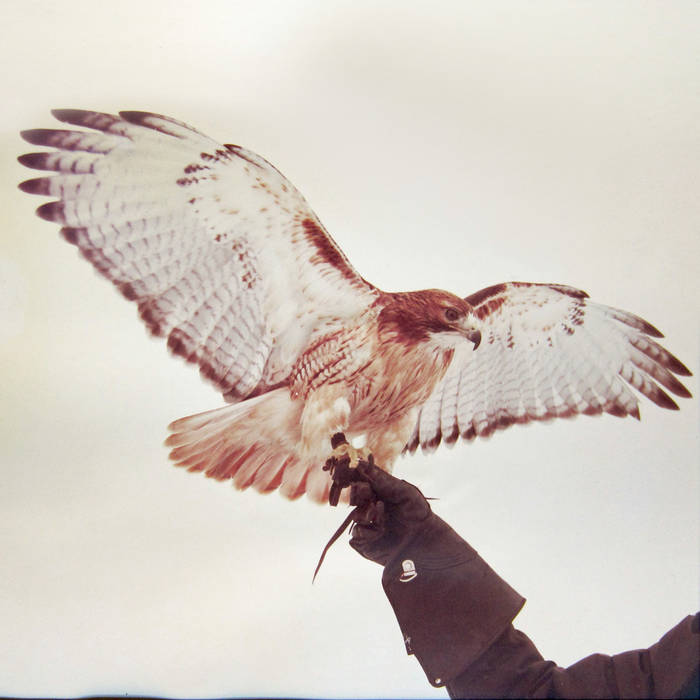 Wild Birds cover art