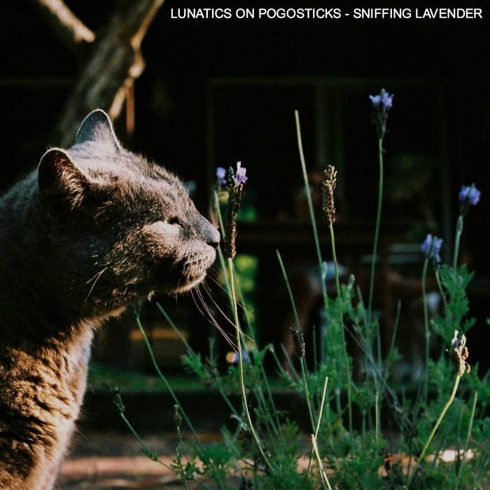 Sniffing Lavender cover art