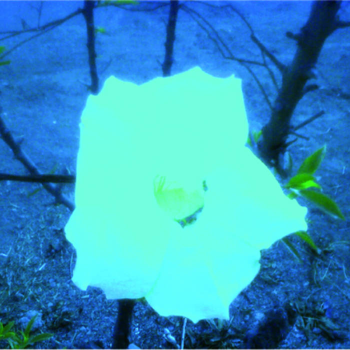 el otro lado de la flor (concierto acústico) cover art