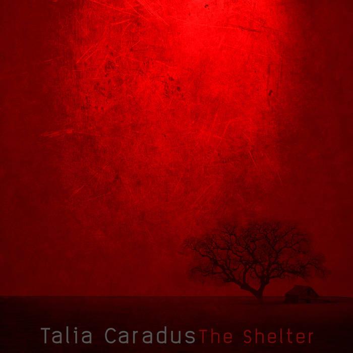 The Shelter cover art