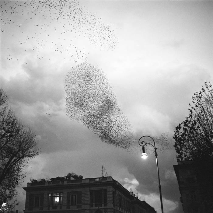 Kill Starlings cover art