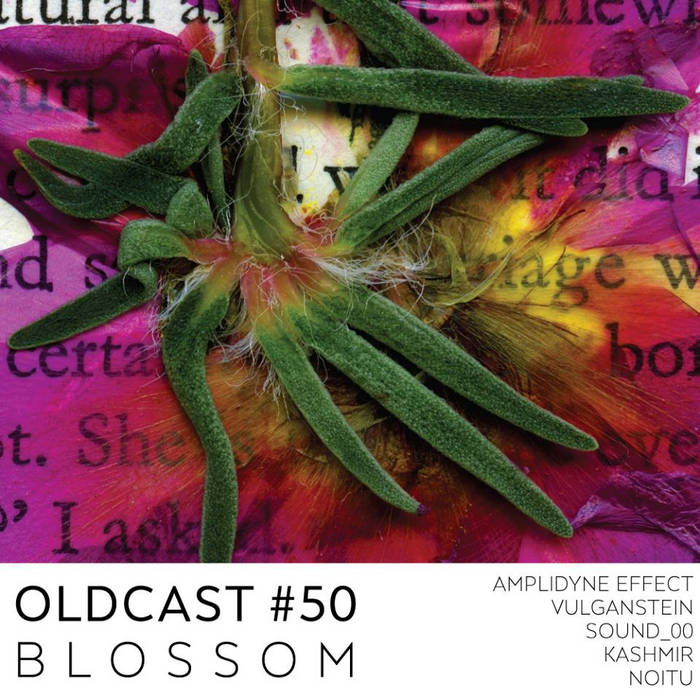 Oldcast #50 - Blossom cover art