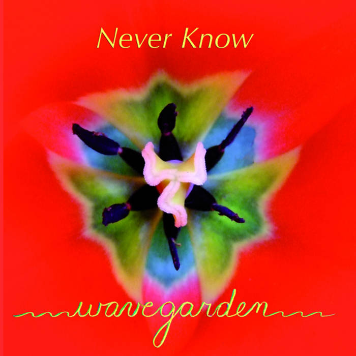 Never Know cover art