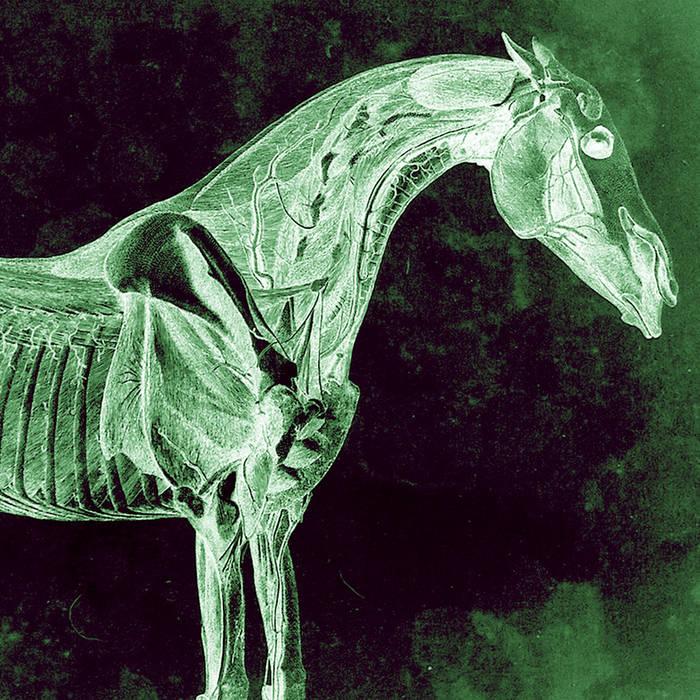 Horse cover art