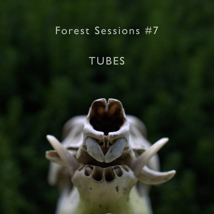 Forest Sessions #7 : Tubes cover art