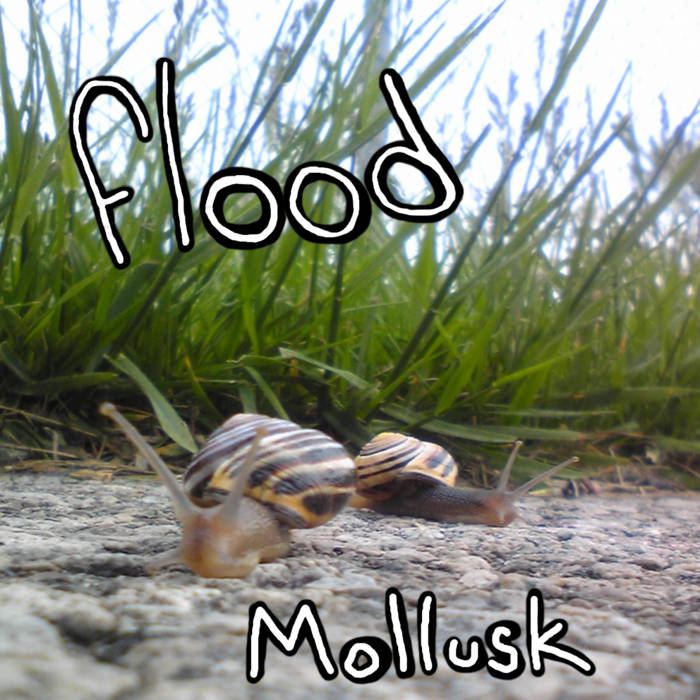 Mollusk cover art