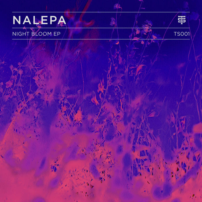 Night Bloom EP cover art