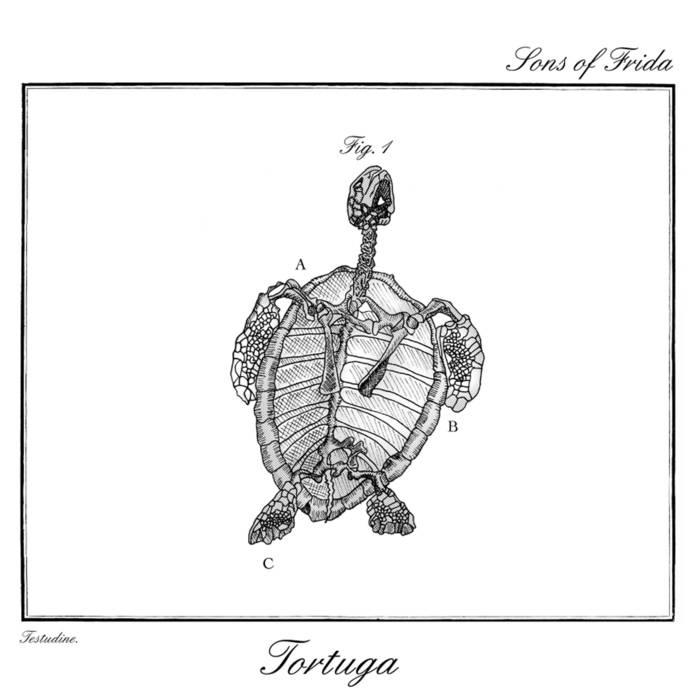 Tortuga cover art