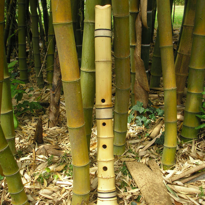 Bamboo cover art