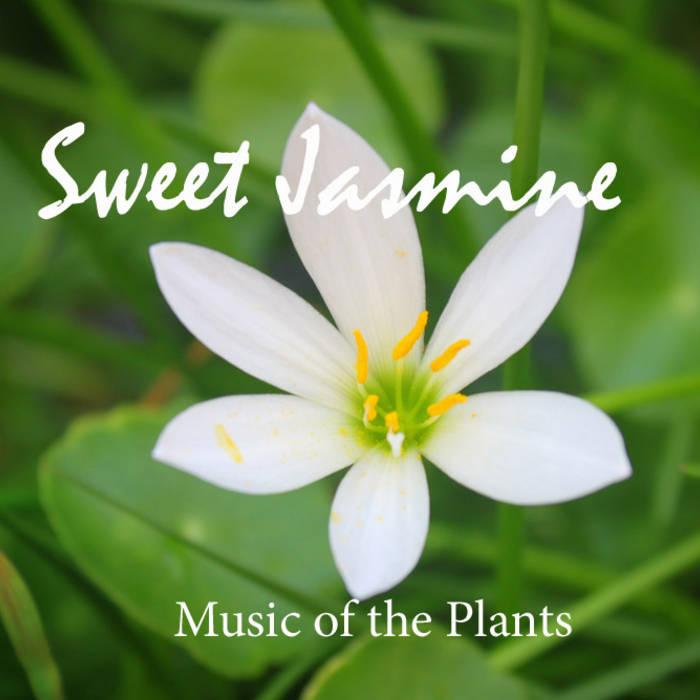 Sweet Jasmine - Music of the Plants cover art