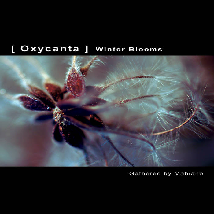 [ Oxycanta ] - Winter Blooms cover art