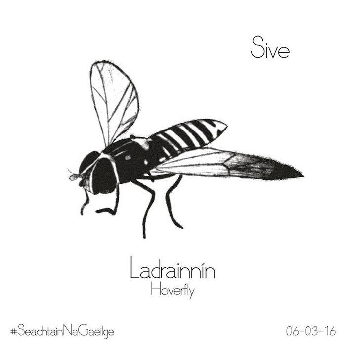 Ladrainnín cover art