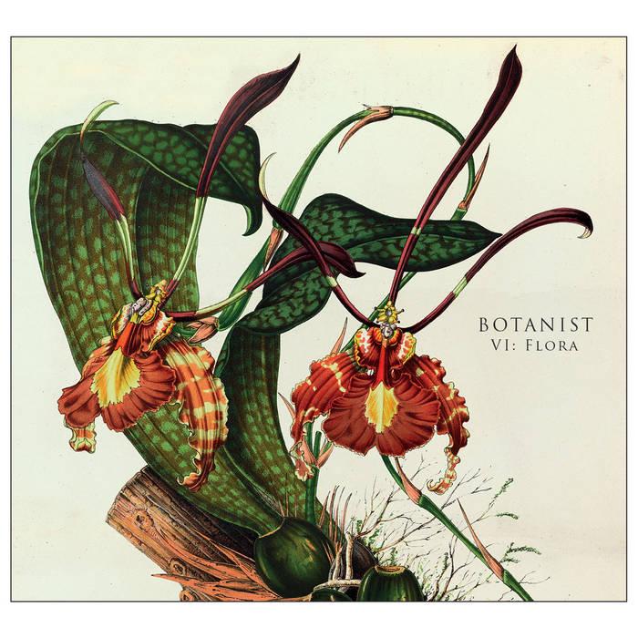 VI: Flora cover art