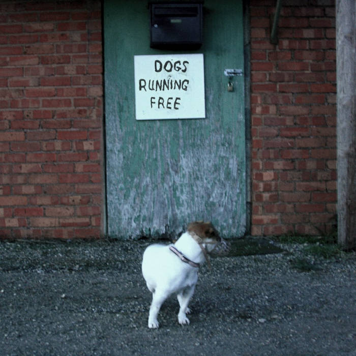 Dogs Running Free cover art