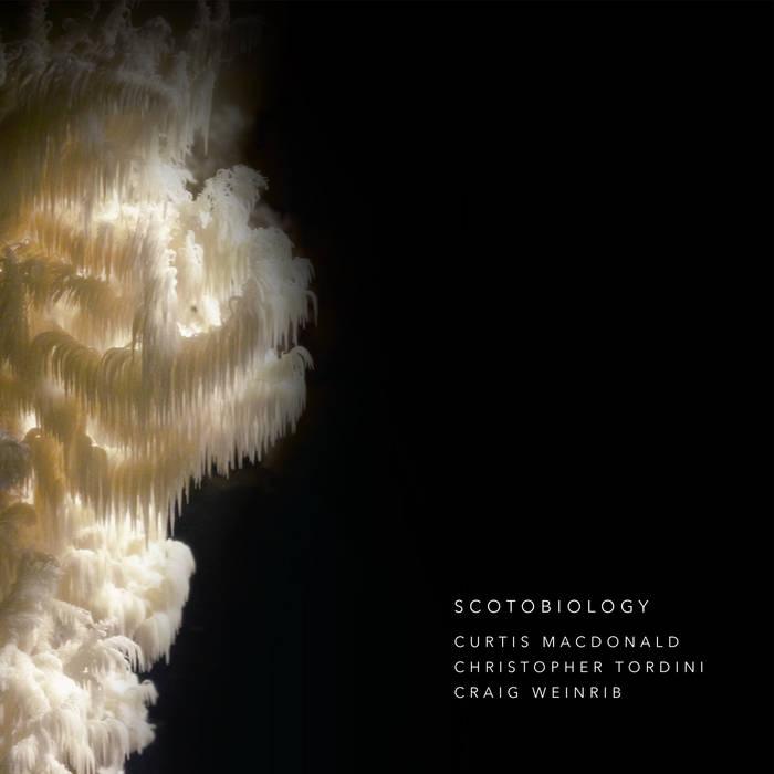 Scotobiology cover art