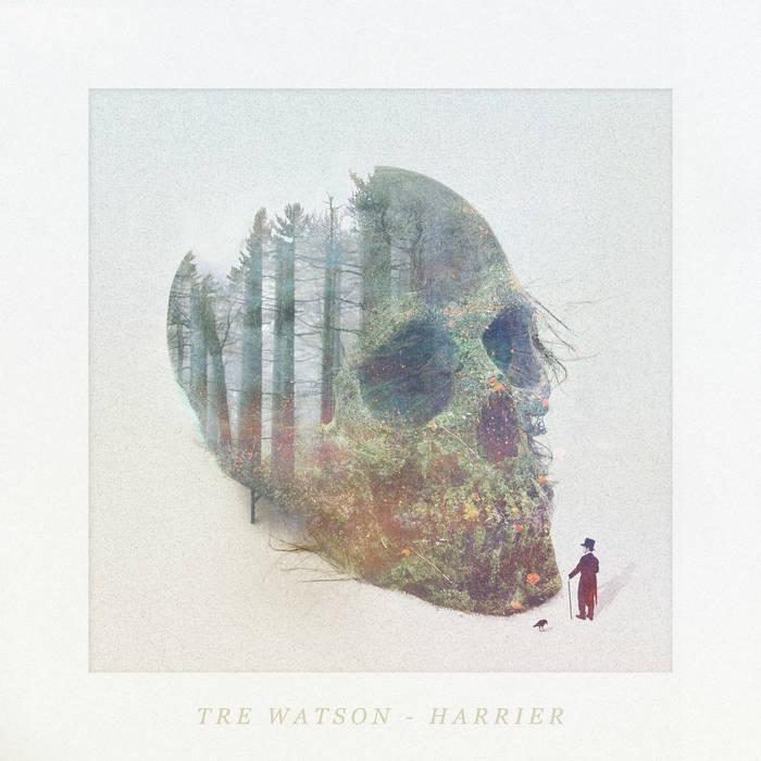 Harrier cover art
