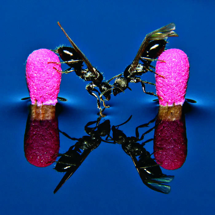 Mouthparts and Wings cover art