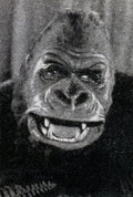 Getúlio, The Old Gorilla image