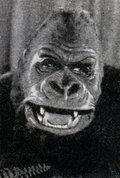 Getúlio, The Old Gorilla image