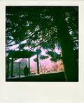 skogar image