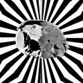 ParrotHeadz image
