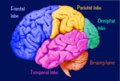 brainplane image