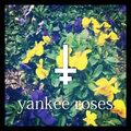 Yankee Roses image