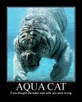 Aqua Cat image