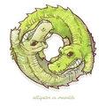 Alligator vs Crocodile image