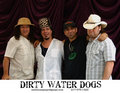Dirty Water Dogs image