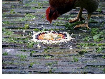 Tour des poulets - DVD main photo