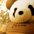 Panda Circus image