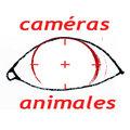 Caméras Animales image