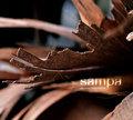 SAMPA image