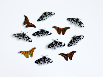 Hand-made Limited Edition Moth Pins main photo