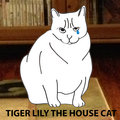 Tiger Lily, The House Cat image